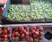 Ready-picked gooseberries and strawberries