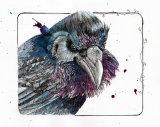 Raven01tiffweb