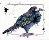 crow001tiffweb