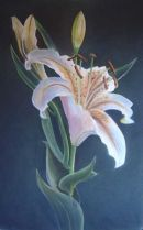 lilly. SOLD