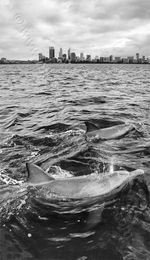 Dolphins Landscape Photography Print