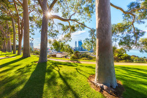 Kings Park and Perth City Landscape Photography Print