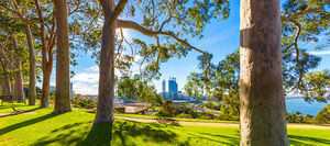 Kings Park Landscape Photography Print