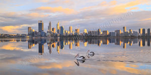 Pelicans on the Swan River Landscape Photography Print