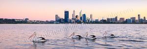 Perth Pelicans at Sunrise Landscape Photography Print