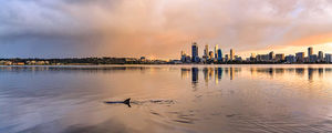 Swan River Dolphin at Sunrise Landscape Photography Print