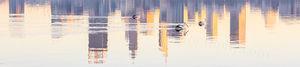 Swan River Pelicans Landscape Photography Print