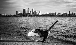 Swans 5 Landscape Photography Print