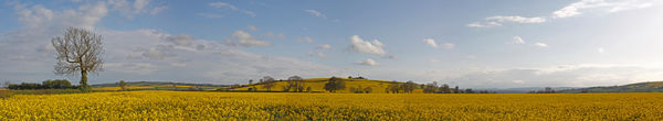 Oil Seed Rape Mine Hill