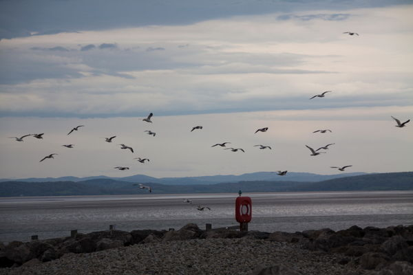 Seagulls at Morecambe