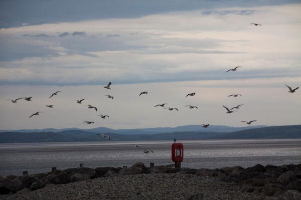 Seagulls at Morecambe