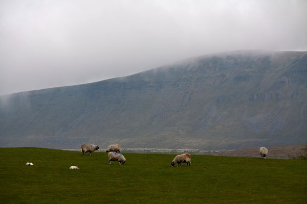 Sheep on the Hills