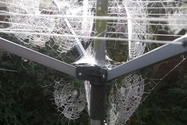 Cobwebbs