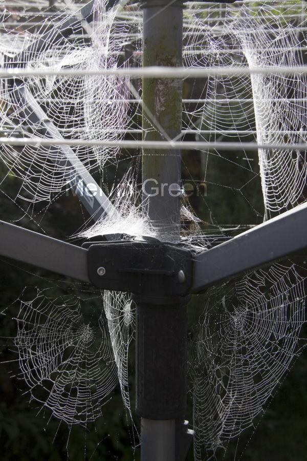 Cobwebbs 1