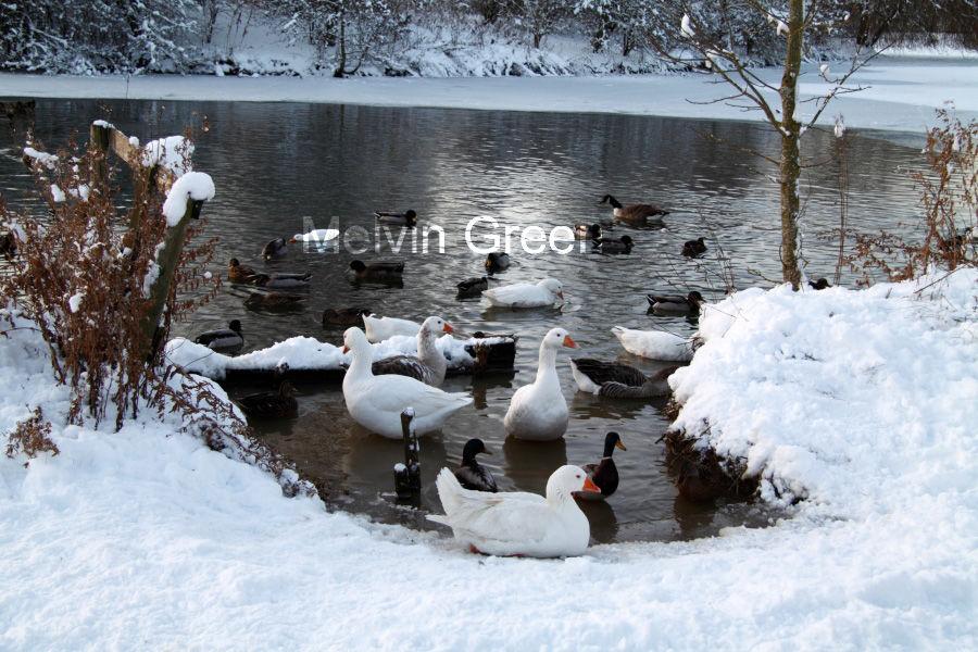Birds on St James Lake