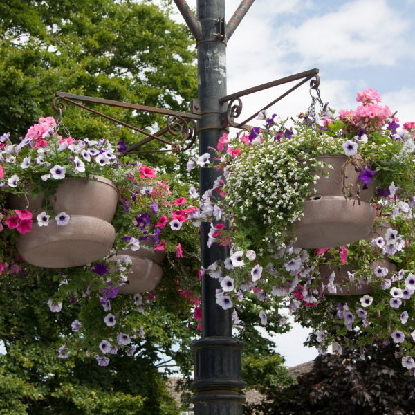 Hanging Baskets Flowers