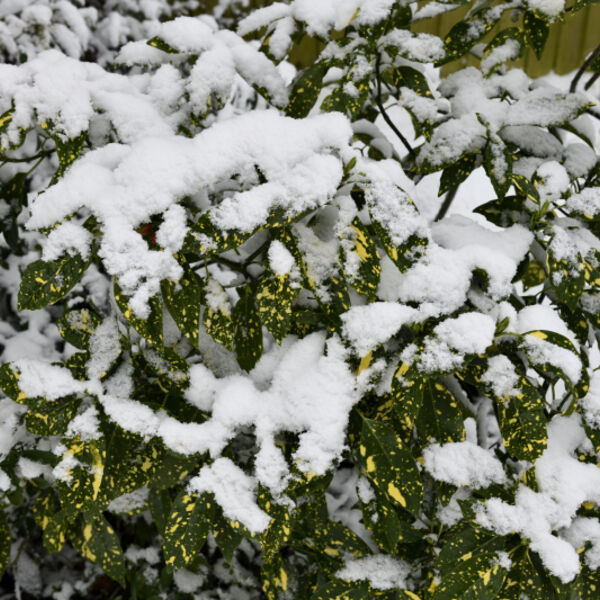 Yellow and Green Leaf Plant in Winter