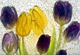 Ice Flower series