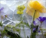 Ice Flowers #53