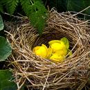 Nesting flowers