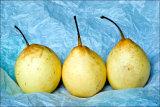 Nashi, japanese pear (omenapäärynä)