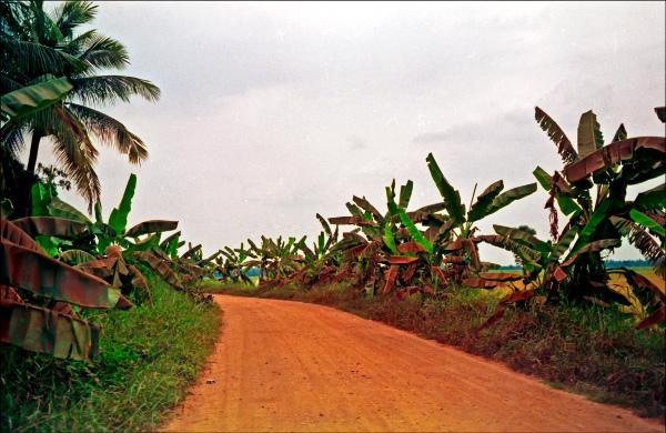 Banana road