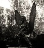 Cemetery angel #4