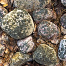 stones covered with lichens