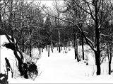 Taivaskallio park in Winter