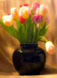 Tulips in black vase