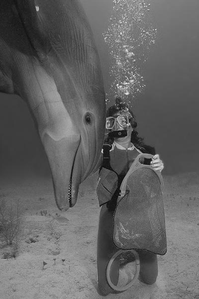 Dolphin & diver, Bahamas