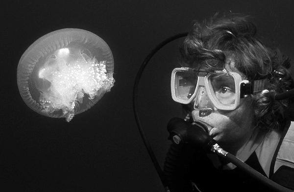 Jellyfish, Truk Lagoon