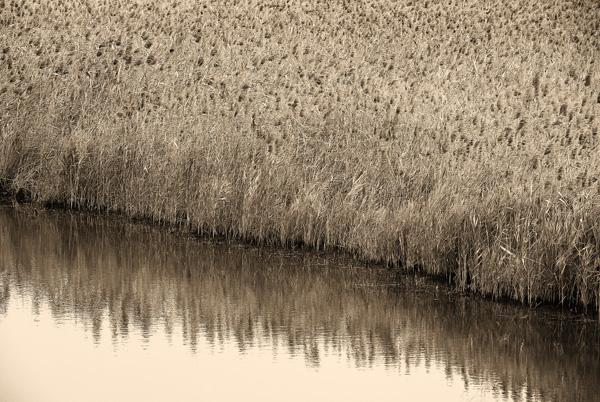 Mai Po marshes