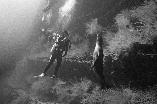 Sea lion & diver