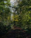 Early Autumn Woods