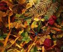 Autumn Windfall