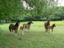 Horses and foals (1)