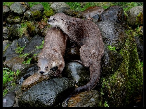Playing Otters