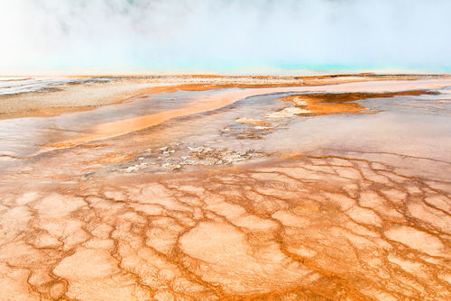 Thermal Run Off, Grand Prismatic Spring