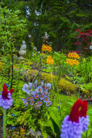 Primulas and meconopsis-meadow.