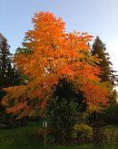 Autumn-colours.