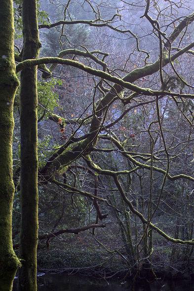 3rd#AndyLeeder#Woodland Tangle