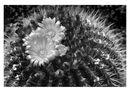 2nd Cacti 3