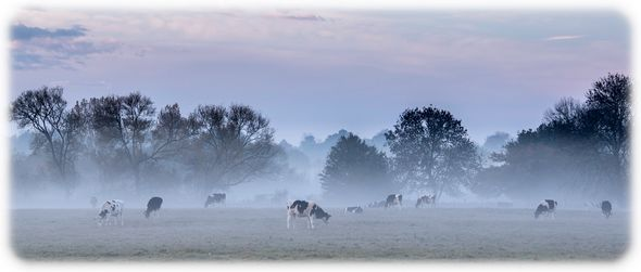 3rd#PeteSorrell#Early morning mist