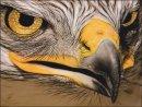 3rd#RexMakemson#Birds of Prey1