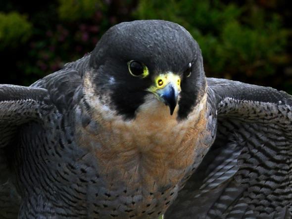 3rd#RexMakemson#Birds of Prey3