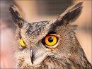 3rd#RexMakemson#Birds of Prey4