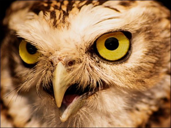 3rd#RexMakemson#Birds of Prey5