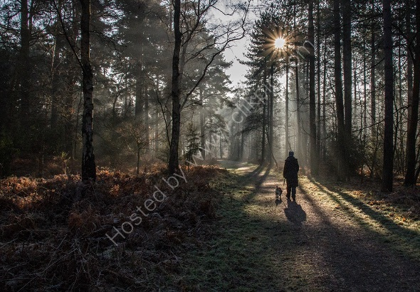 1st Walk in the woods Pete Sorrell