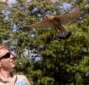 3rd#Pete Sorrell#The Falconer
